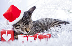 Christmas sleeping cat Royalty Free Stock Photo