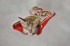 Christmas sleeping kitty Royalty Free Stock Photo