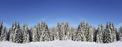 Christmas snow royalty free stock photo