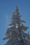 Christmas Snow. Snow covering Christmas tree.  Above it there's a clear blue sky Stock Photo