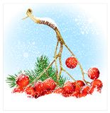 Christmas snow background with rowan. Royalty Free Stock Images