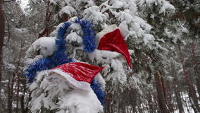 Christmas snow-covered branches in a forest where there are caps of Santa Claus and Christmas tree decorations. Fairy thick forest where it is snowing and covers stock video