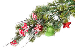 Christmas snow fir tree branch with holly berry and decor Royalty Free Stock Photo