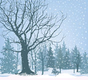 Christmas snow landscape wallpaper. Snowy forest background. Tre Royalty Free Stock Photo