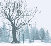 Christmas snow landscape wallpaper. Snowy forest background. Stock Image