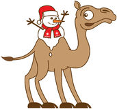 Christmas snowman melting on a camel's back Stock Photos