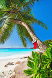 Christmas sock on palm tree at exotic tropical beach. Holiday concept for New Year Cards. Praslin, Anse Georgette, Seychelles Royalty Free Stock Photography