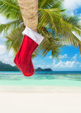 Christmas sock on palm tree at exotic tropical beach. Holiday concept for New Years Cards Royalty Free Stock Photo