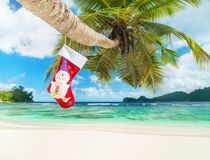 Christmas sock on palm tree at exotic tropical beach Royalty Free Stock Image