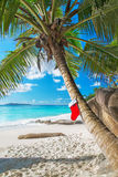 Christmas sock on palm tree at exotic tropical beach. Holiday concept for New Years Cards. Praslin, Anse Georgette, Seychelles Royalty Free Stock Photo