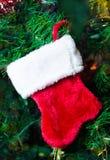 Christmas sock on the tree Royalty Free Stock Photos