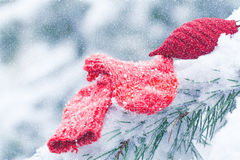 Christmas socks lying on the pine tree frosty in the snow. Royalty Free Stock Photos