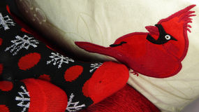 Christmas socks against cardinal pillow Royalty Free Stock Image