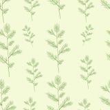 Christmas spruce branch seamless pattern. Hand. Drawn illustration tree Royalty Free Stock Photos