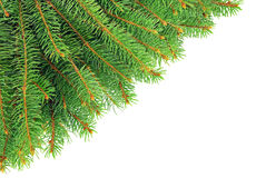Christmas, spruce branches isolated on white background. Stock Photos