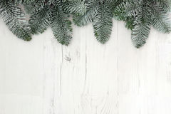 Christmas Spruce Fir Background Royalty Free Stock Image