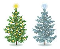 Christmas spruce fir trees with ornaments Stock Photo