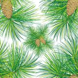 Christmas spruce seamless pattern. Stock Image