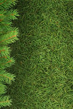 Christmas spruce  texture Royalty Free Stock Photos