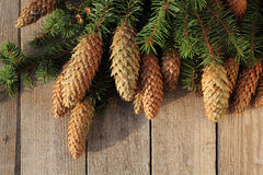 Christmas spruce twigs and cones Royalty Free Stock Photos