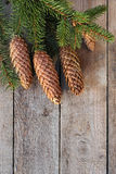 Christmas spruce twigs and cones Royalty Free Stock Images