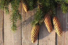 Christmas spruce twigs and cones Stock Images