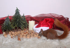 Christmas squirrel Royalty Free Stock Images