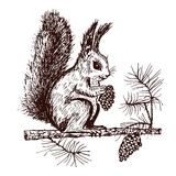 Christmas squirrel and animal with fir-cone in the forest. winter holidays. engraved hand drawn in old sketch and Royalty Free Stock Image