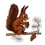 Christmas squirrel and animal with fir-cone in the forest. winter holidays. engraved hand drawn in old sketch and Royalty Free Stock Images