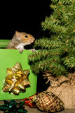 Christmas Squirrel Royalty Free Stock Image