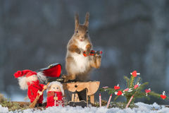 Christmas squirrel song Stock Photo