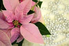 Christmas star... stock photo