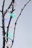 Christmas star garland on branches of tree Royalty Free Stock Photo