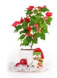 Christmas star gift box flowerpot Royalty Free Stock Photography