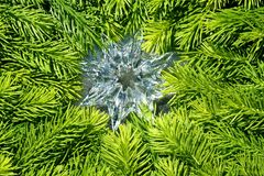 Christmas star and green spruce Royalty Free Stock Image