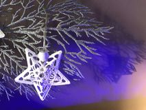 Christmas star light on a silver frosty branch royalty free stock images