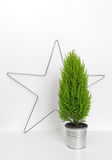 Christmas star and little green tree Royalty Free Stock Photo