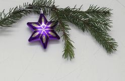 Christmas star on Christmas tree green branch, on white background royalty free stock photo