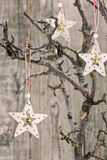 Christmas stars on bare branch Royalty Free Stock Photos