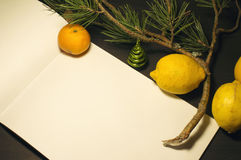Christmas still life decoration. A white sheet of paper with spruce branches and citrus Royalty Free Stock Image