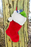 Christmas stocking on cactus Stock Photography