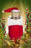Christmas stocking cat. A golden tabby cat with a santa hat making a funny face while stuffed into a red christmas stocking.  Christmas trees made of bells and Stock Image