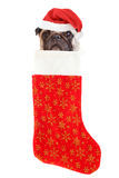 Christmas stocking dog Royalty Free Stock Image
