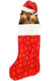Christmas stocking dog Royalty Free Stock Images