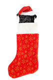 Christmas stocking dog Stock Photos
