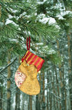 Christmas Stockings, for gifts, bright color. Gift Packaging, Decoration on Christmas Tree, colorful sock hanging on a branch with snow in the coniferous forest royalty free stock photo