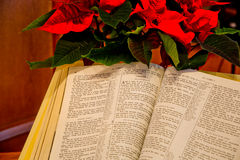 Christmas Story. An open Bible showing the Christmas story with red pointsetta in the background Stock Image