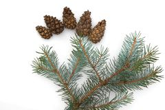 Christmas structure of a fir-tree, isolated on a white background royalty free stock photography