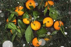Christmas symbols - fir-tree and tangerines on a dark wooden bac. Kground. Snow. Top view. Food background Royalty Free Stock Image