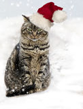 Christmas Tabby Cat. A brown tabby cat with slightly irritated expression, green eyes and a pink nose wearing a Santa hat jauntily shifted to one side Stock Photos